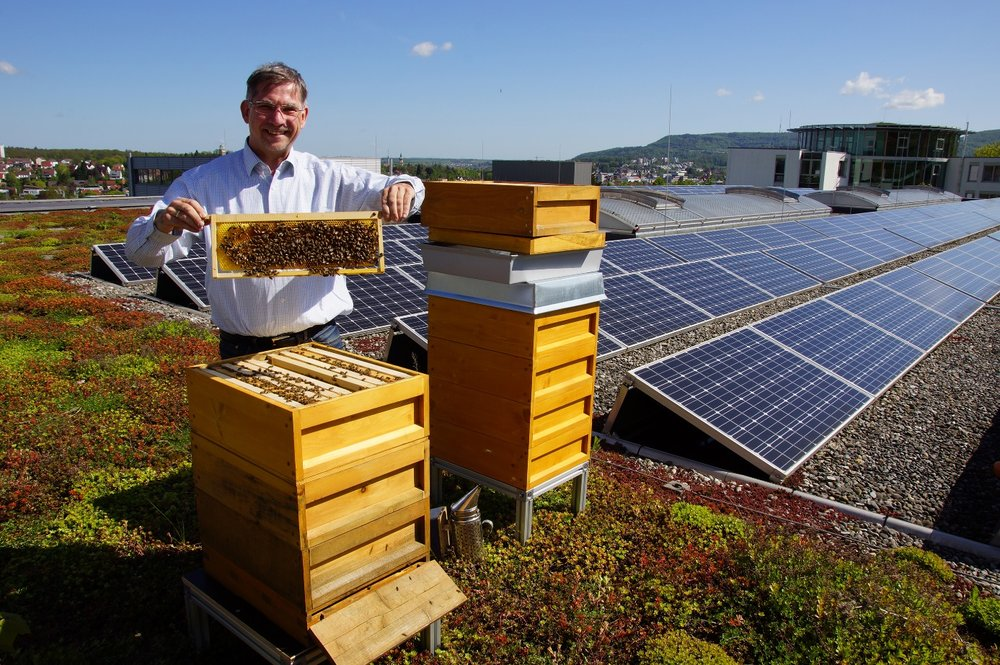 Peter Weis takes a look inside the beehives located on ISO-Chemie's green roof.